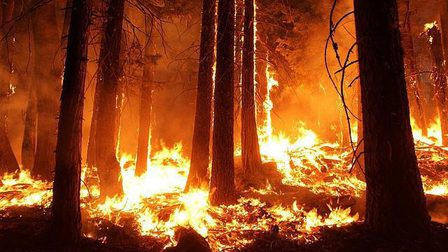 Wildfire-1105209_640_thumb_main